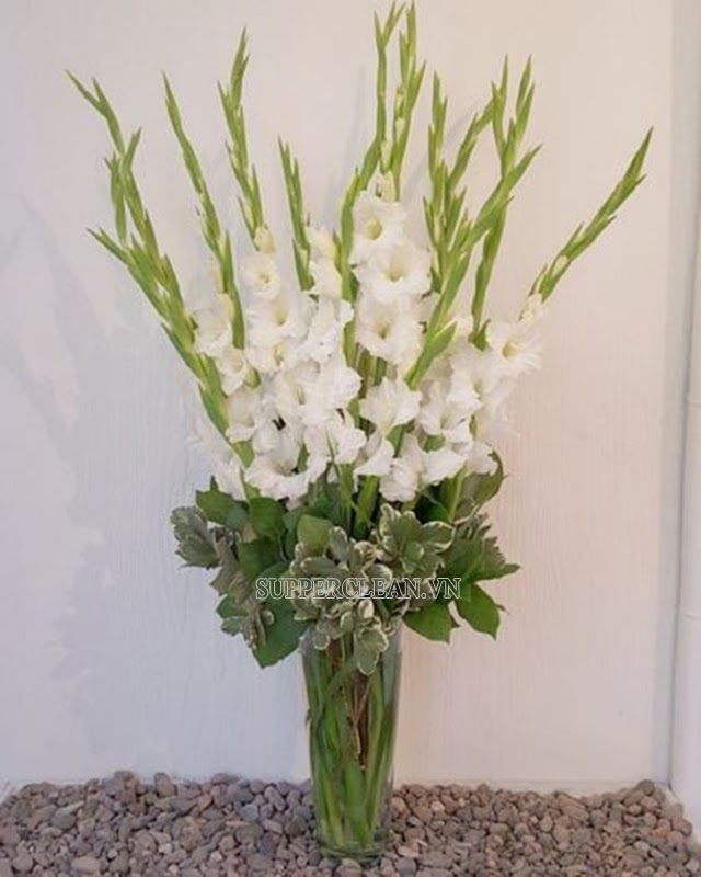 hoa lay ơn
