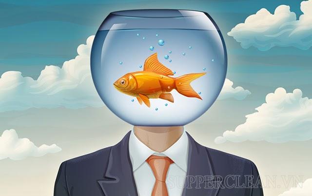 não cá vàng là gì